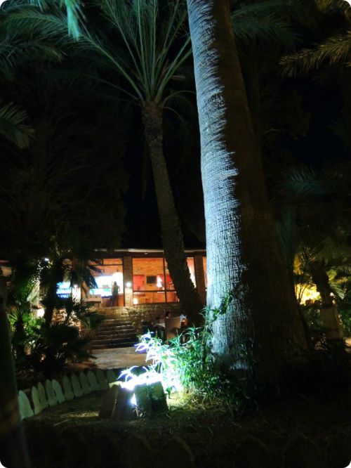 The garden at night