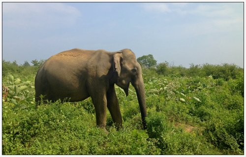 Elephant spotting at Udawalawe National Park